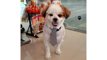 Well Established Franchise of Pet Grooming Shop for Sale in Gurugram